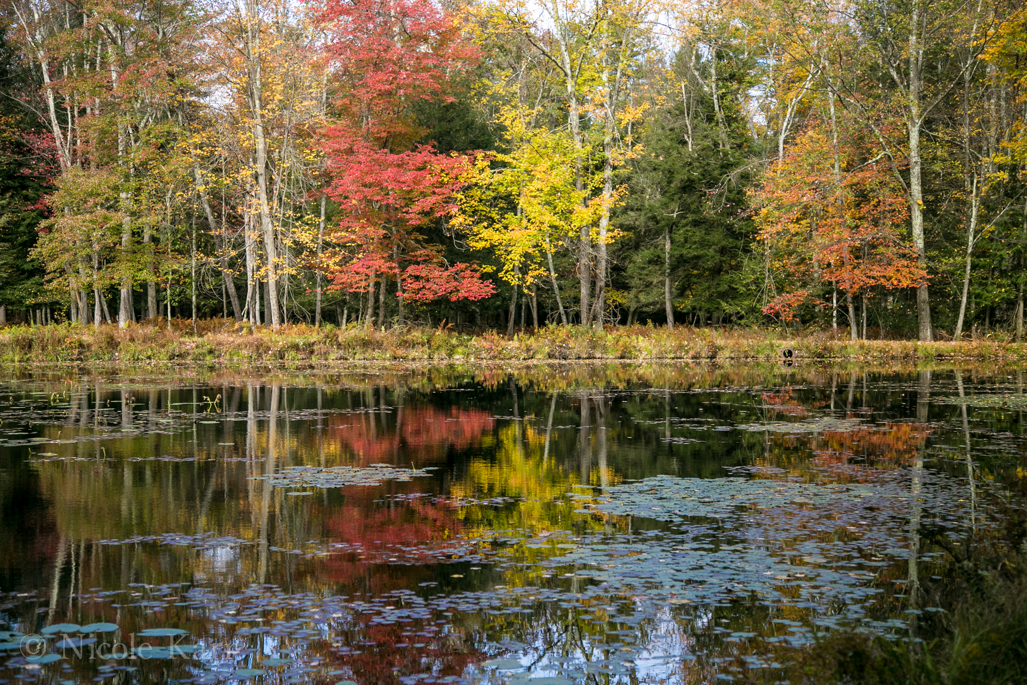 foliage refletced