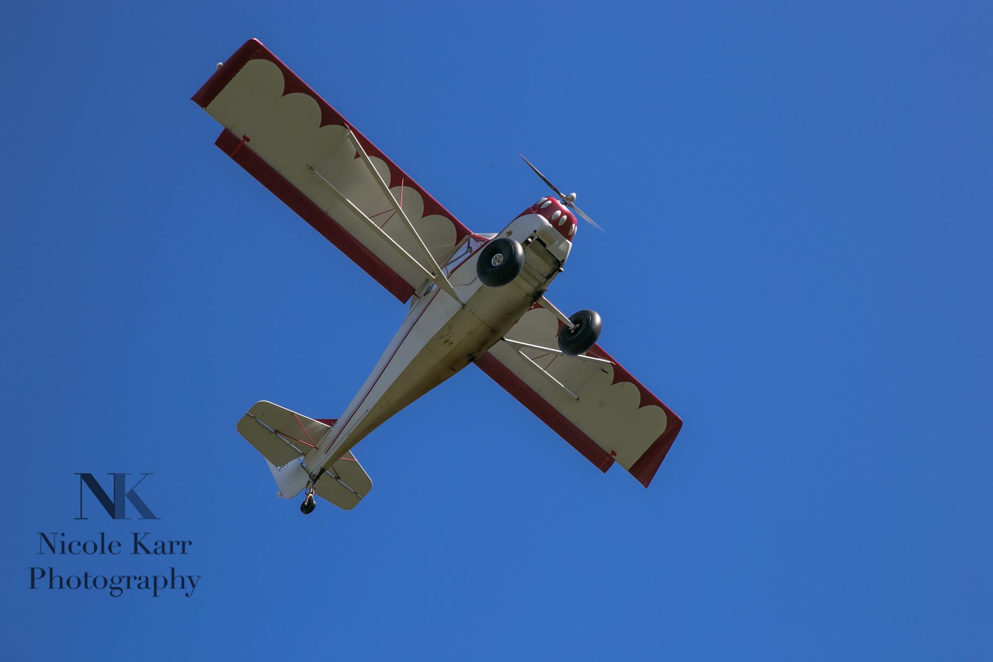 fly-in-7970